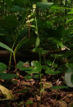 Rok v Polabském lužním lese