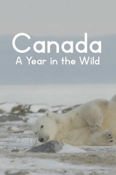 Rok v kanadské divočině (Podzim)