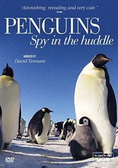 Tučňáci – život z blízka (3)