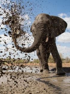 Napajedlo - africká zvířecí oáza (3)