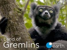 Tučňáci z Madagaskaru III (Jančit či vojančit? / Zprávy vše spraví)