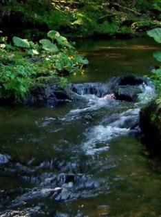 Čisté vody