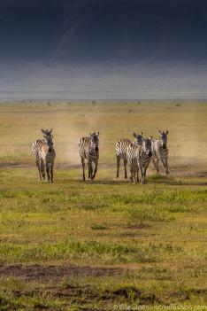 Safari turistika – zaplať a zastřel si