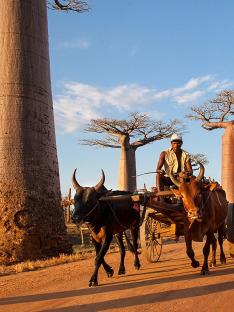 Madagaskar - stromy a lidé (1)