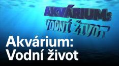 Akvárium: Vodní život (2)